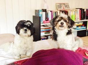 yuki and iris